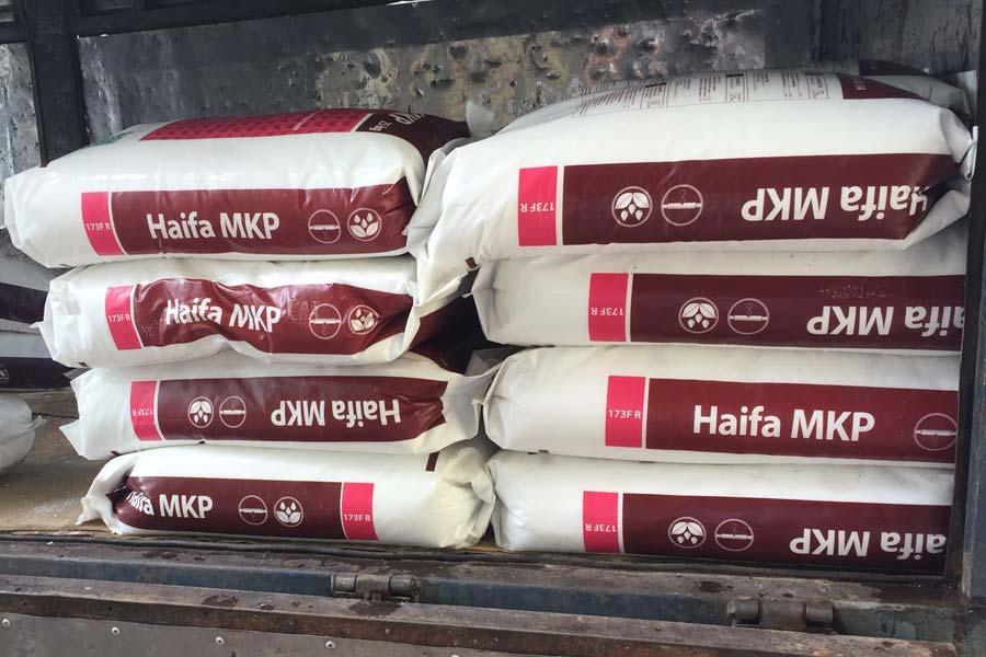mkp haifa