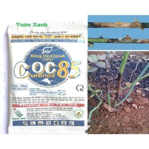 coc-85-vinasa02.jpg