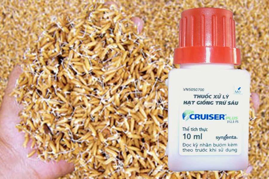 thuốc xử lý giống lúa Cruiser plus 312.5FS