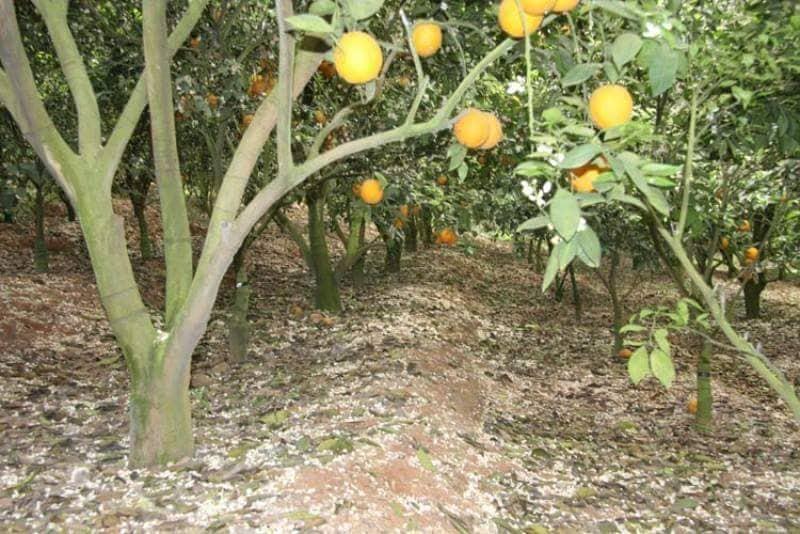 cam-cao-phong-vinasa02.jpg
