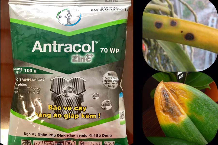 antracol 70WP