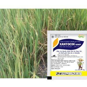 Xantocin-40-wp-vinasa07.jpg