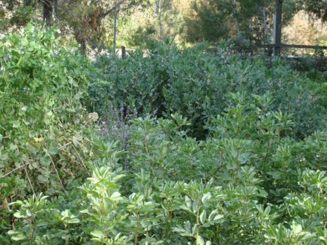 nông nghiệp hữu cơ Israel