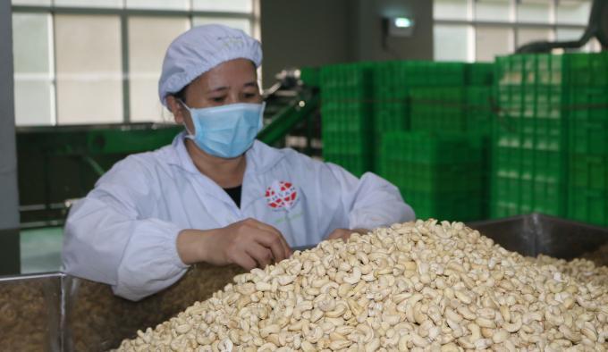 xuất khẩu hạt điều