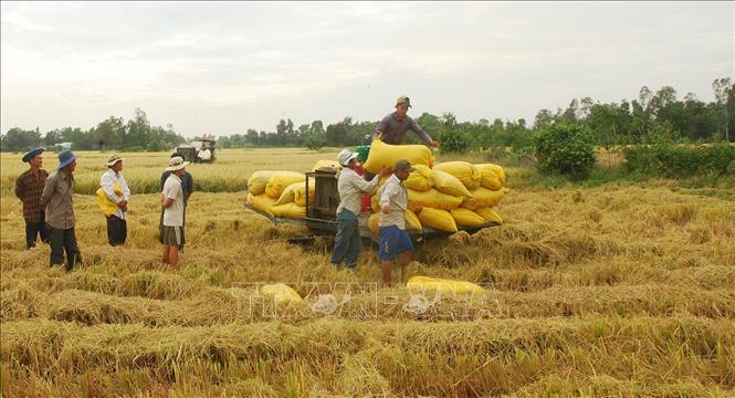 thị trường nông sản